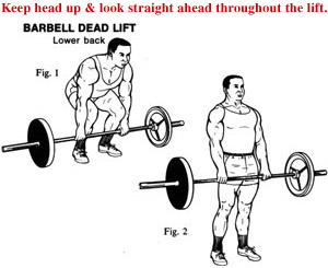 dead lift conventional 9155B6A9-155D-0217-060B7950DEC52058.png.pagespeed.ce.B91Gvx2pN3